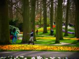 オランダのキューケンホフ公園