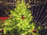 ケルンのクリスマスマーケット018